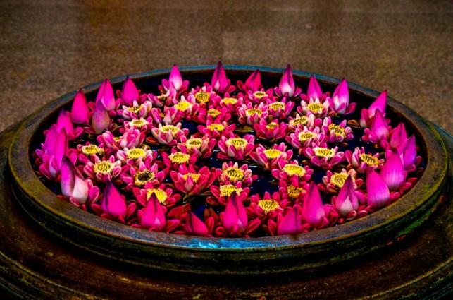 1 Flor de loto
