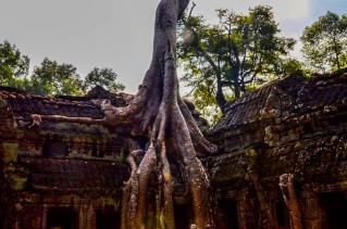 13 templo de Ta Prohm