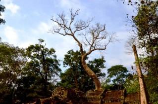 2 Templo de Ta Prohm