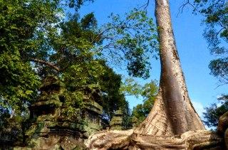 4 templo de Ta Prohm