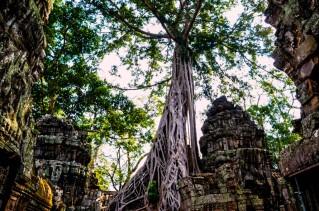 7 templo de Ta Prohm