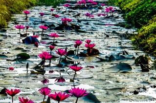 75 Camino a Banteay Srey